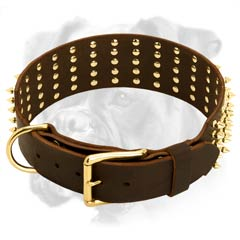 Fabulous leather Boxer collar
