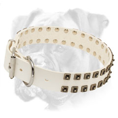 Trendy leather Boxer collar with brass studs