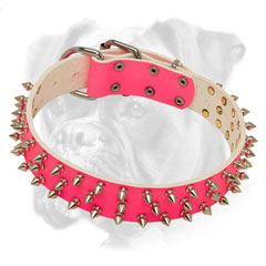 Trendy pink collar for Boxer