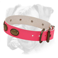 Trendy leather collar for creating gorgeous look of your she-Bixer
