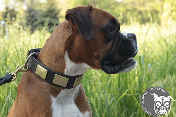 Elegant Boxer collar with brass plates