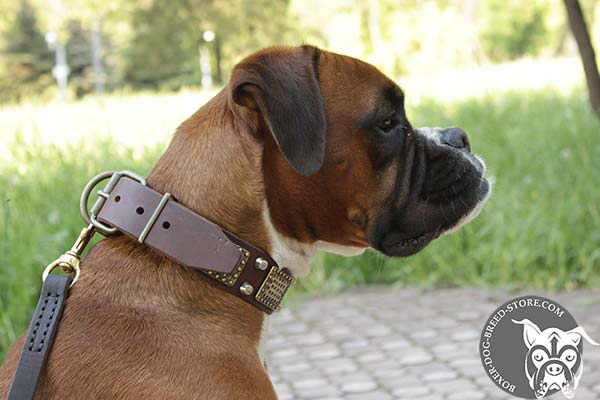 Leather Boxer collar with brass traditional buckle