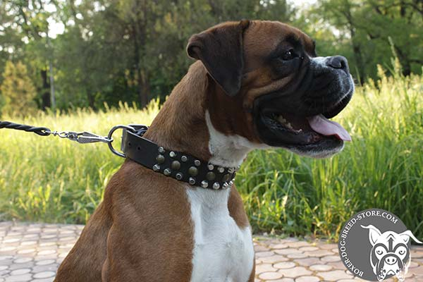 Comfortable leather Boxer collar