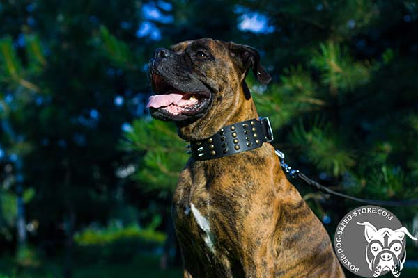 Hypoallergenic leather Boxer collar