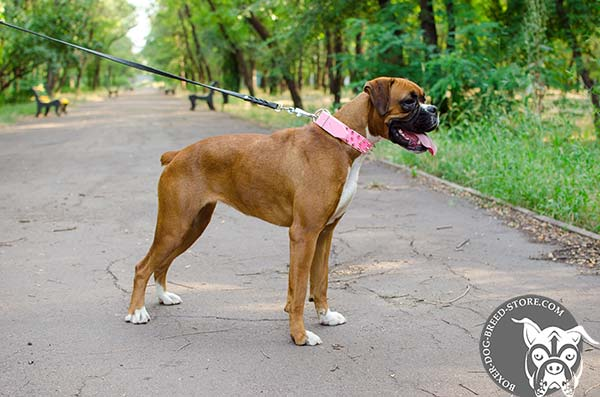 Trustworthy leather Boxer collar