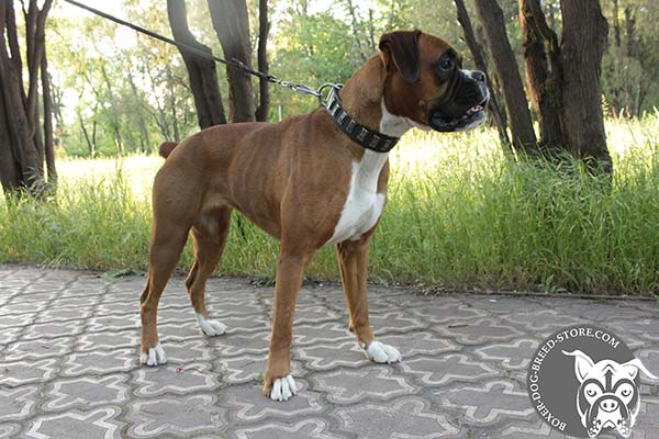 Perfect fit Boxer collar