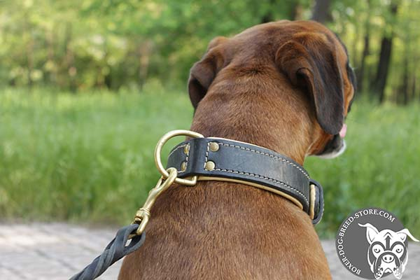 Nappa padded Boxer collar with strong D-ring