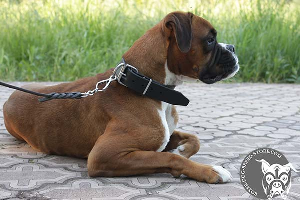 Leather Boxer collar with traditional buckle