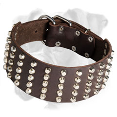 Strong Boxer collar with securely riveted fittings
