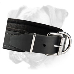 Durable and comfortable leather padded dog collar for obedience training