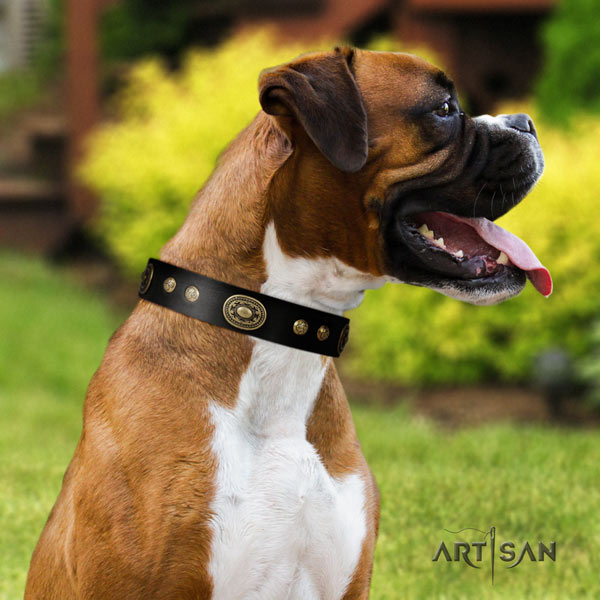 Boxer embellished genuine leather collar with rust resistant traditional buckle