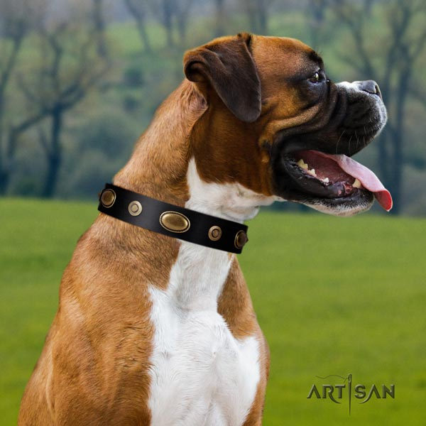 Boxer exceptional genuine leather collar with corrosion proof hardware