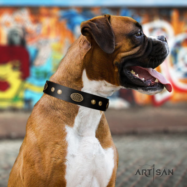 Boxer incredible leather collar with rust resistant buckle