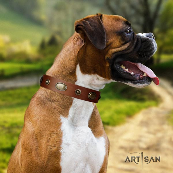 Boxer handcrafted natural leather collar with rust resistant fittings