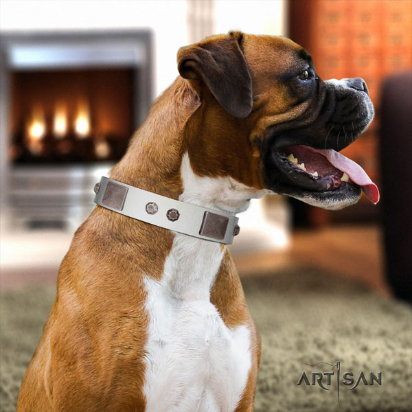 Boxer studded full grain leather dog collar for stylish walking
