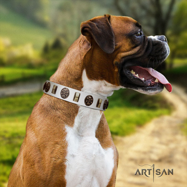 Boxer studded full grain genuine leather dog collar for basic training
