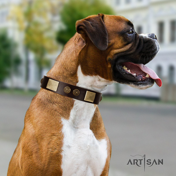 Boxer fine quality full grain natural leather dog collar for basic training