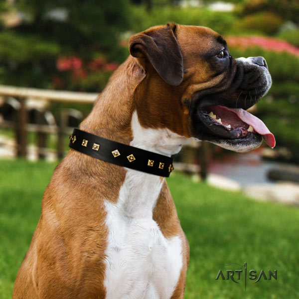 Boxer extraordinary natural leather collar with corrosion proof traditional buckle