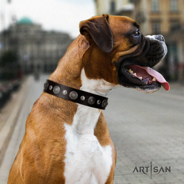 Boxer stunning full grain leather collar with rust resistant fittings
