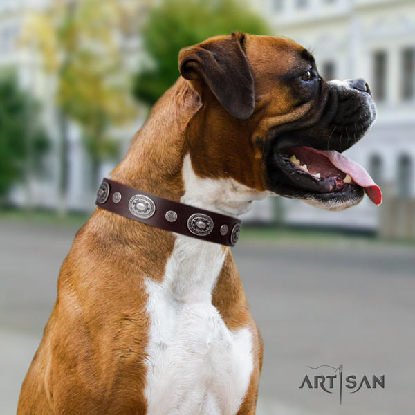 Boxer amazing full grain leather collar with corrosion proof traditional buckle