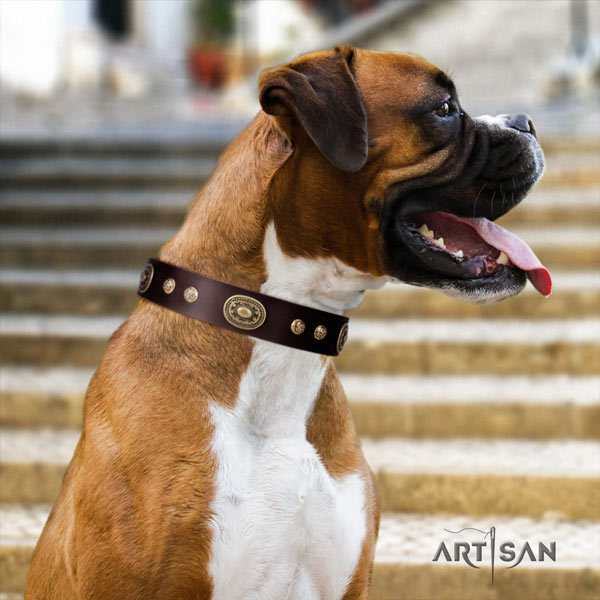 Boxer stunning genuine leather collar with rust resistant buckle