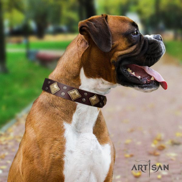Boxer unusual natural leather collar with corrosion proof hardware