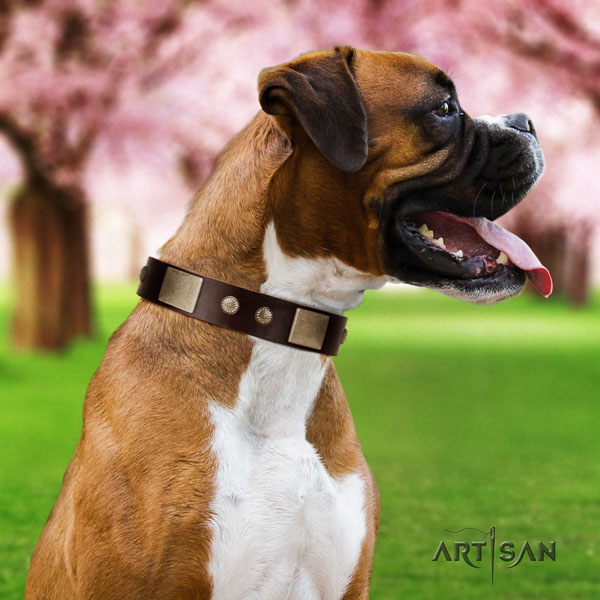 Boxer top notch full grain natural leather dog collar for everyday walking