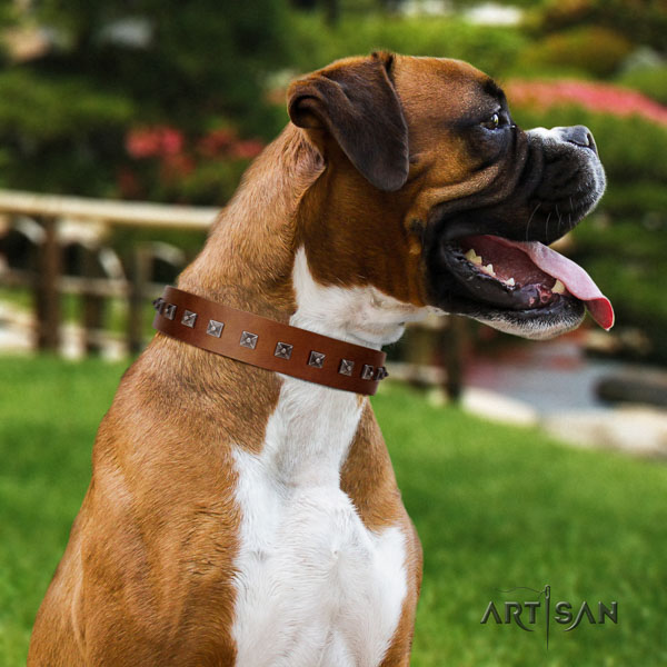 Boxer full grain leather collar with strong fittings for basic training