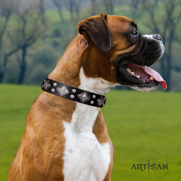 Boxer significant natural leather collar with corrosion resistant buckle