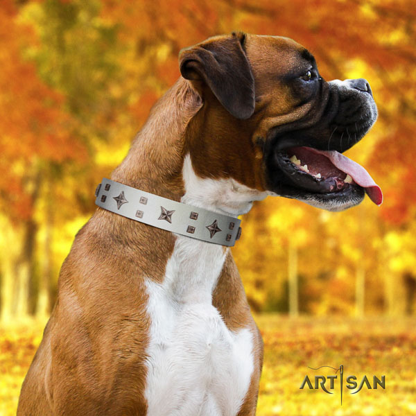 Boxer extraordinary full grain natural leather dog collar for daily use