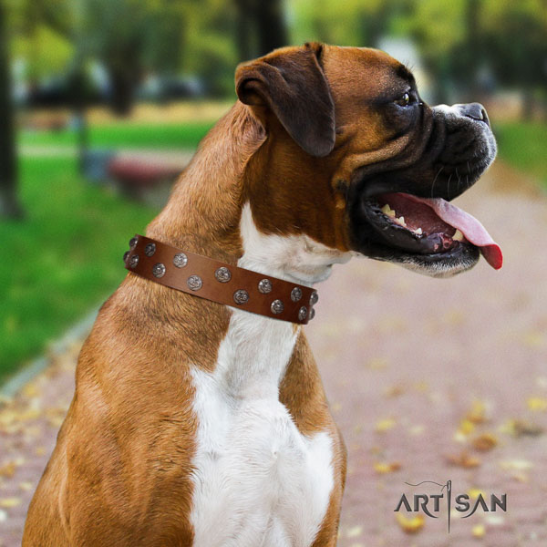 Boxer embellished full grain natural leather dog collar for daily use