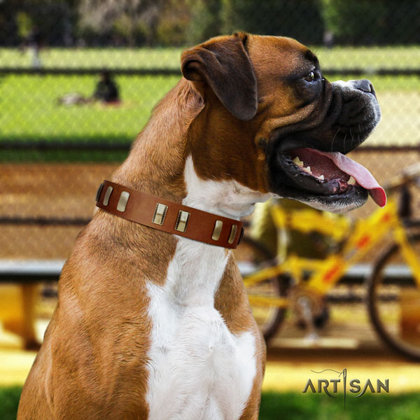 Boxer remarkable full grain natural leather dog collar for stylish walking