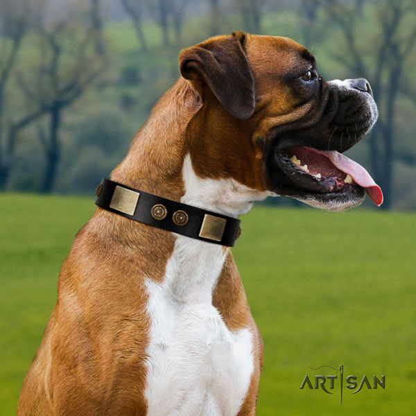 Boxer amazing genuine leather dog collar for fancy walking