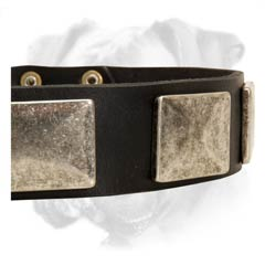 Practical Boxer collar
