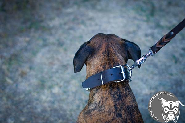 Boxer leather collar with durable nickel plated fittings for walking