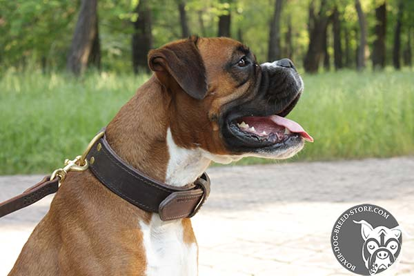 Boxer leather collar with strong fittings for daily walks