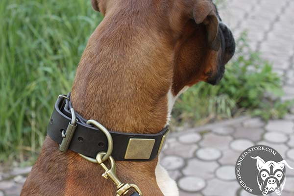 Boxer leather collar of genuine materials with handset plates for stylish walks
