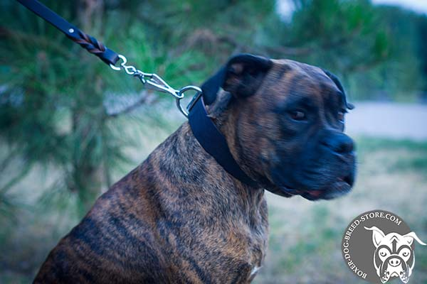 Boxer leather collar of genuine materials with d-ring for leash attachment for daily activity
