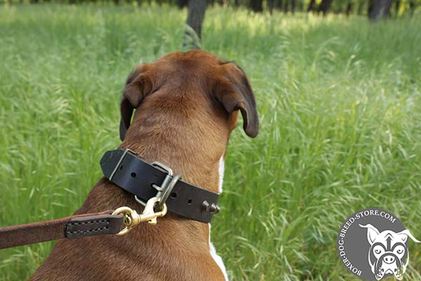 Boxer leather collar with rust-proof fittings for walking