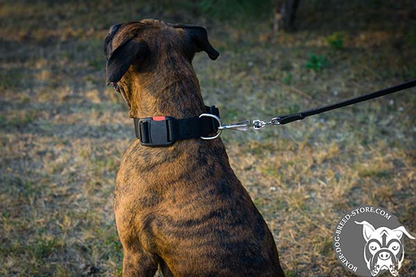 Boxer nylon collar of high quality with traditional buckle for walking