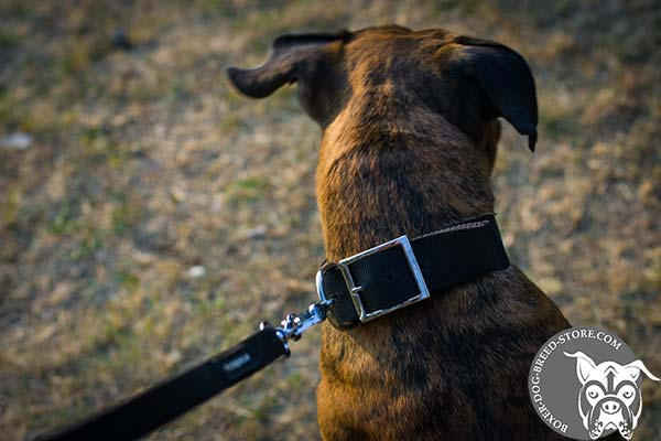 Boxer nylon collar with rust-resistant nickel plated fittings for walking