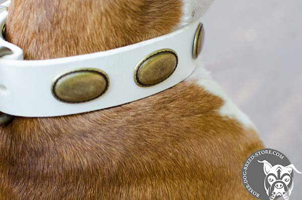 Brass ovals on white Boxer collar
