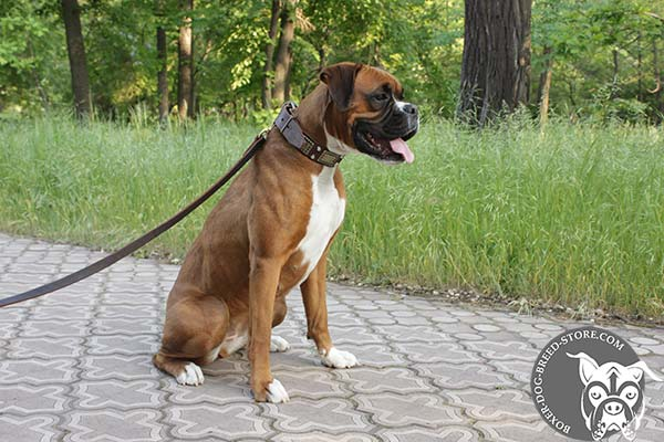 Brown leather Boxer collar