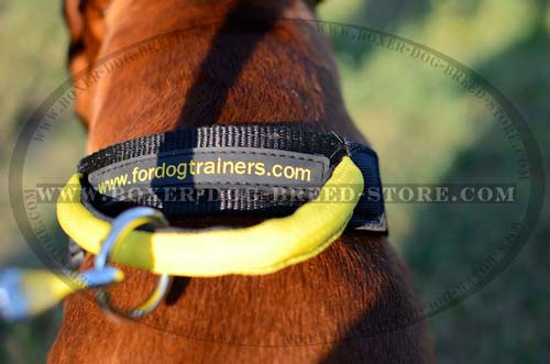 Excellent nylon collar for stubborn Boxer