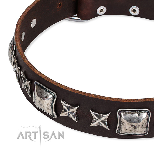 Genuine leather dog collar with studs for everyday use