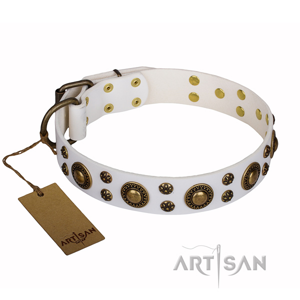 Daily use genuine leather collar with studs for your pet