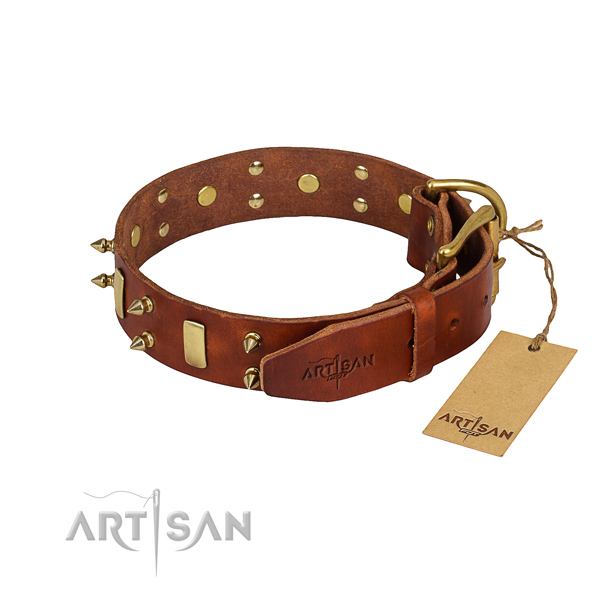 Tough leather dog collar with brass plated hardware