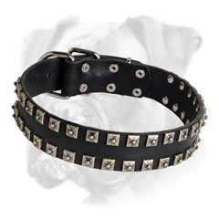 Exclusive decorated leather Boxer collar