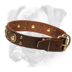 Reliable Boxer Collar with Firm Hardware