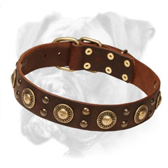 Leather Boxer Collar with Brass Circles